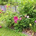 Hibiscus In The Garden by My Rubio Garden