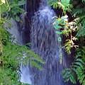 Hidden Waterfall by Pamela Walton