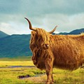 Highland Cow by Celestial Images