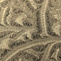 Extraordinary Hoarfrost Scallop Patterns In Sepia by Kim Bemis