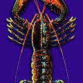 Homarus Vulgaris Flying On The Purple by Baptiste Posters