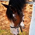 Horse by Alasarami Alasarami