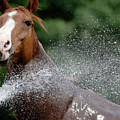 Horse Bath II by Julie Niemela