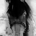 Horse Portrait  by Gull G