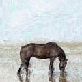 Horse by Shahzad Hamid