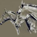 Horse Study by Daliana Pacuraru