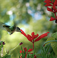 Hummingbird Delight by Sue Stefanowicz