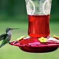 Hummingbird by Denis Lemay