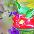 Hummingbird Found In Wild Nature On Sunny Day by Alex Grichenko