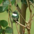 Hummingbird by Jordan Ellsworth