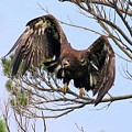 Hurrying Back To The Nest by Debbie Storie