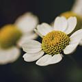 In The Garden by Laura Diara