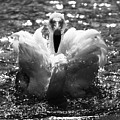 In The Water by Angel Ciesniarska