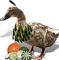 Indian Duck by Gravityx9 Designs