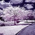 Infrared Garden by Galeria Trompiz