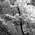 Infrared Tree Pic by Heiko Koehrer-Wagner