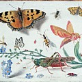 Insects And Garden Pansy by Jan van Kessel