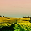Iowa Cornfield Panorama by Mountain Dreams