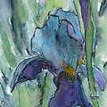 Iris by Bev Veals