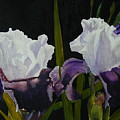 Iris by Dwight Williams