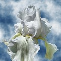 Iris In The Clouds by Rick Friedle