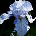 Iris Photograph by Kimberly Walker