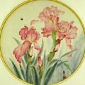 Iris by Ying Wong