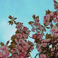 Irish Spring by Bill Cannon
