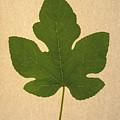 Italian Honey Fig Leaf by Frank Wilson