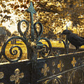 Jackdaw On Church Gates by Amanda Elwell