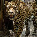 Jaguar by Dant� Fenolio