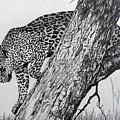 Jaquar In Tree by Stan Hamilton