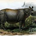Javan Rhinoceros, Endangered Species by Biodiversity Heritage Library