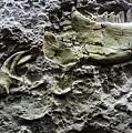 Jaw Bone by Rob Hans
