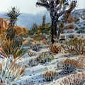 Joshua Tree by Donald Maier