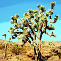 Joshua Trees by William Dey