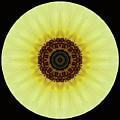Kaleidoscope Image Of An Italian Sunflower by Brenda Jacobs