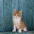 Kitten On A Greek Island by Jean-Louis Klein & Marie-Luce Hubert