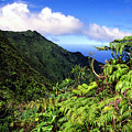 Koolau Summit Trail by Thomas R Fletcher