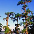 Lake Martin Cypress Swamp by Thomas R Fletcher
