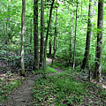 Lakeside Trail Winding Path - Yellowwood Lake by Scott D Van Osdol