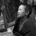 Lama Baby by Lian Wang