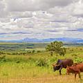 Landscape In Malawi by Marek Poplawski