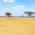 Landscape Near Laisamis, Kenya by Marek Poplawski