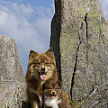 Lapinko�ra Dog And His Pup by Jean-Louis Klein & Marie-Luce Hubert