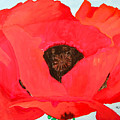Large Poppy by Richard Le Page
