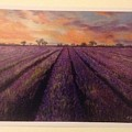 Lavender Field by Sharon Davies Hunt