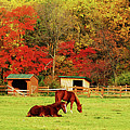 Lazy Autumn Day by Lori Tambakis