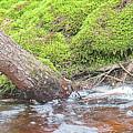 Leaning Tree Trunk By A Stream by A Gurmankin