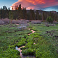 Lenticular Meadow by Nolan Nitschke